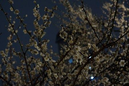 夜の梅_e0223337_22572125.jpg
