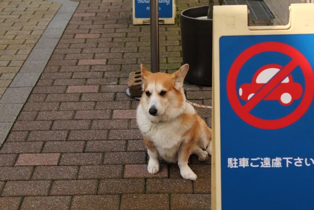 金沢お店めぐり_b0132338_22124744.jpg