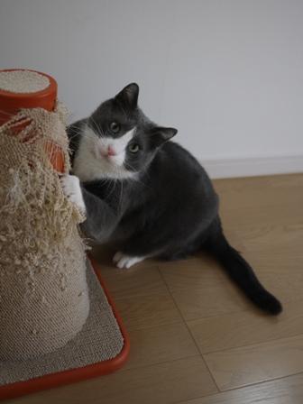 猫のお友だち カン太くん編。_a0143140_23464210.jpg