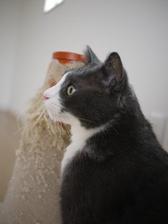猫のお友だち カン太くん編。_a0143140_23503119.jpg