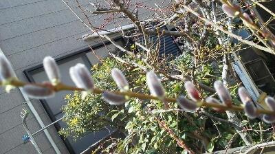 春到来!!!!_e0114857_23335669.jpg