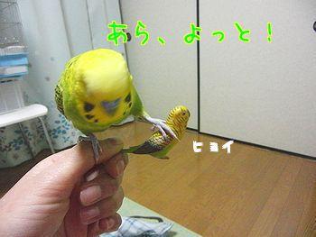 f0196665_22212612.jpg