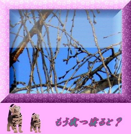 b0078675_910049.jpg