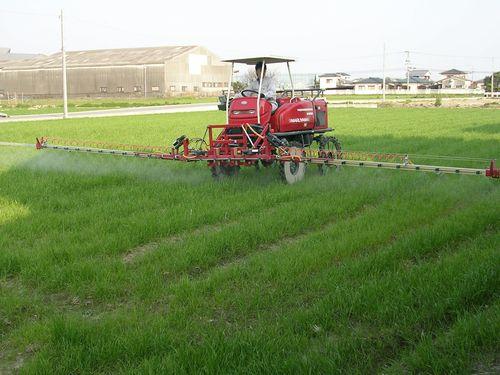 麦の消毒_f0236594_151266.jpg