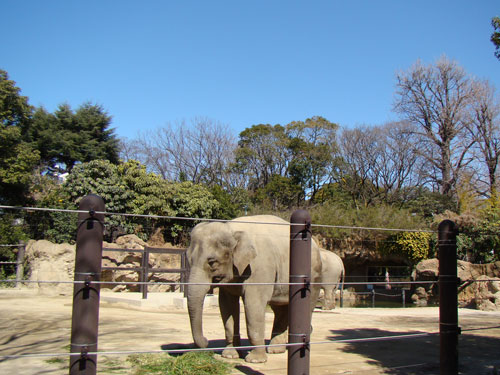 上野動物園2_a0047200_103472.jpg