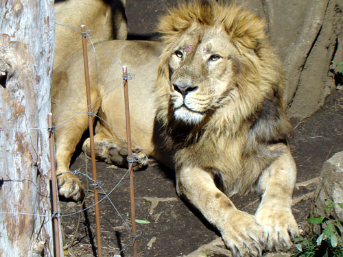 上野動物園2_a0047200_1035871.jpg