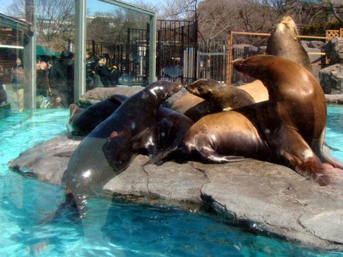 上野動物園2_a0047200_1041015.jpg