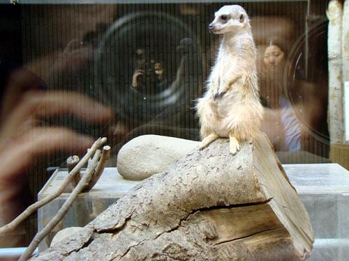 上野動物園2_a0047200_1041749.jpg