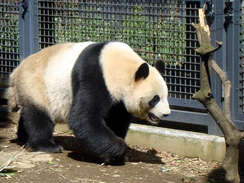 上野動物園1、パンダちゃん_a0047200_9303054.jpg