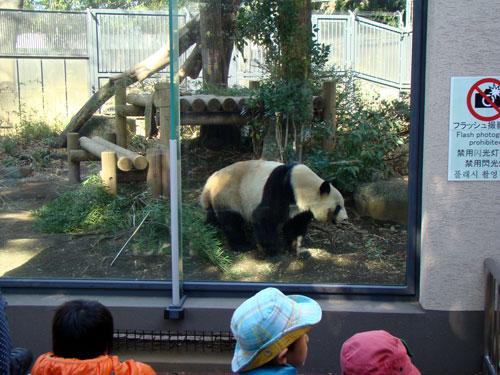 上野動物園1、パンダちゃん_a0047200_9303293.jpg