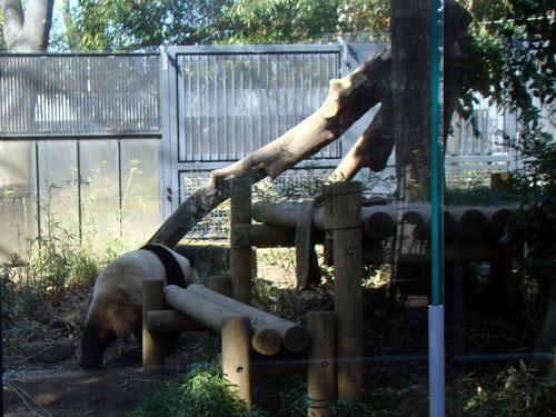 上野動物園1、パンダちゃん_a0047200_9303629.jpg