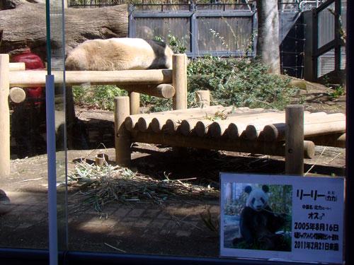 上野動物園1、パンダちゃん_a0047200_9303893.jpg
