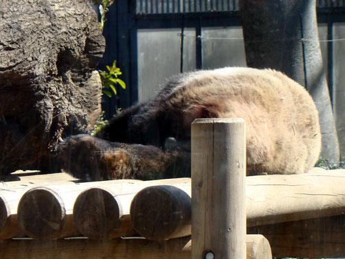 上野動物園1、パンダちゃん_a0047200_9304325.jpg