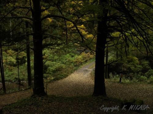 「物理の森の中で道が二つに分かれていた」:「バック・ツー・ザ・フューチャー」_e0171614_1602412.jpg