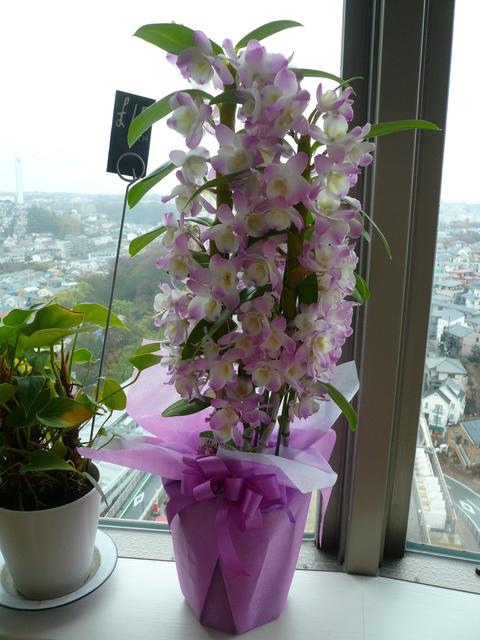 お花の宅急便_e0237625_07682.jpg