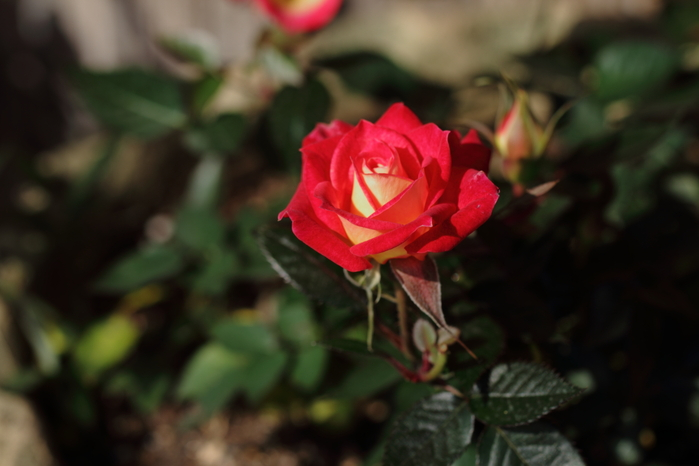 店の花と、花灯路!_b0160331_1704162.jpg