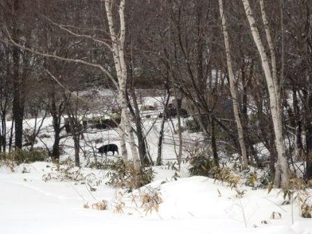 岩泉町の山奥に、「龍泉洞黒豚」を訪ねる_b0206037_14471250.jpg