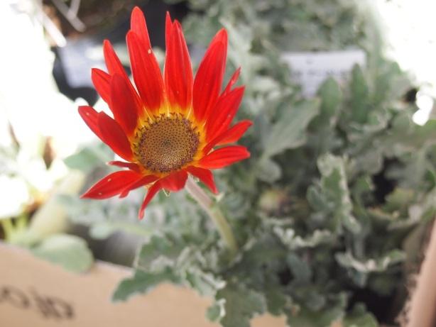 植え込みを待つ植物☆_c0152341_23594724.jpg