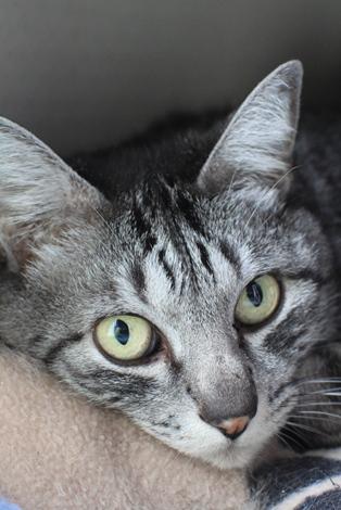 3/12センター猫さんがもう1匹_e0151545_22511436.jpg