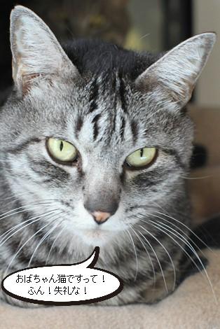 3/12センター猫さんがもう1匹_e0151545_22541549.jpg