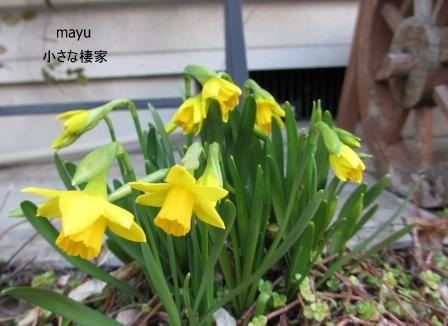 心が躍る季節♪_a0243064_0225485.jpg