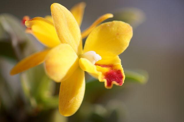 自宅の花(4) ミニラン_b0223668_6444181.jpg