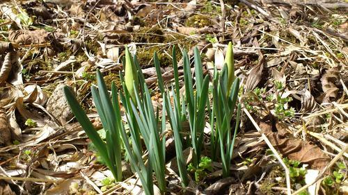 春の訪れ!!第2弾_e0160569_1642346.jpg