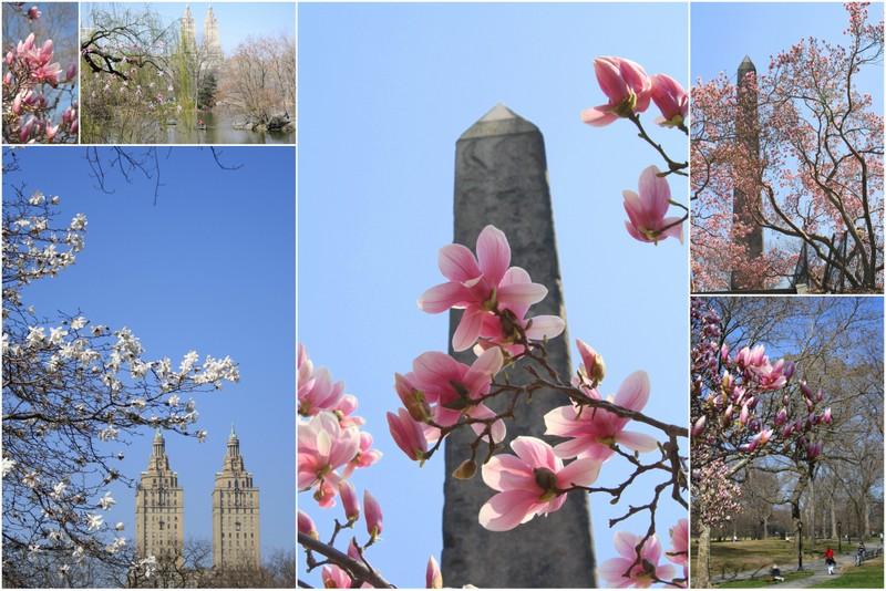 春♪_d0233672_5293936.jpg