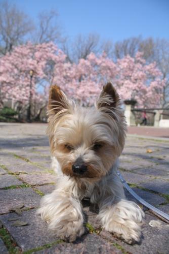 春♪_d0233672_5331183.jpg