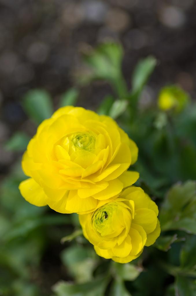 「花とマクロレンズ」_a0133692_20215632.jpg