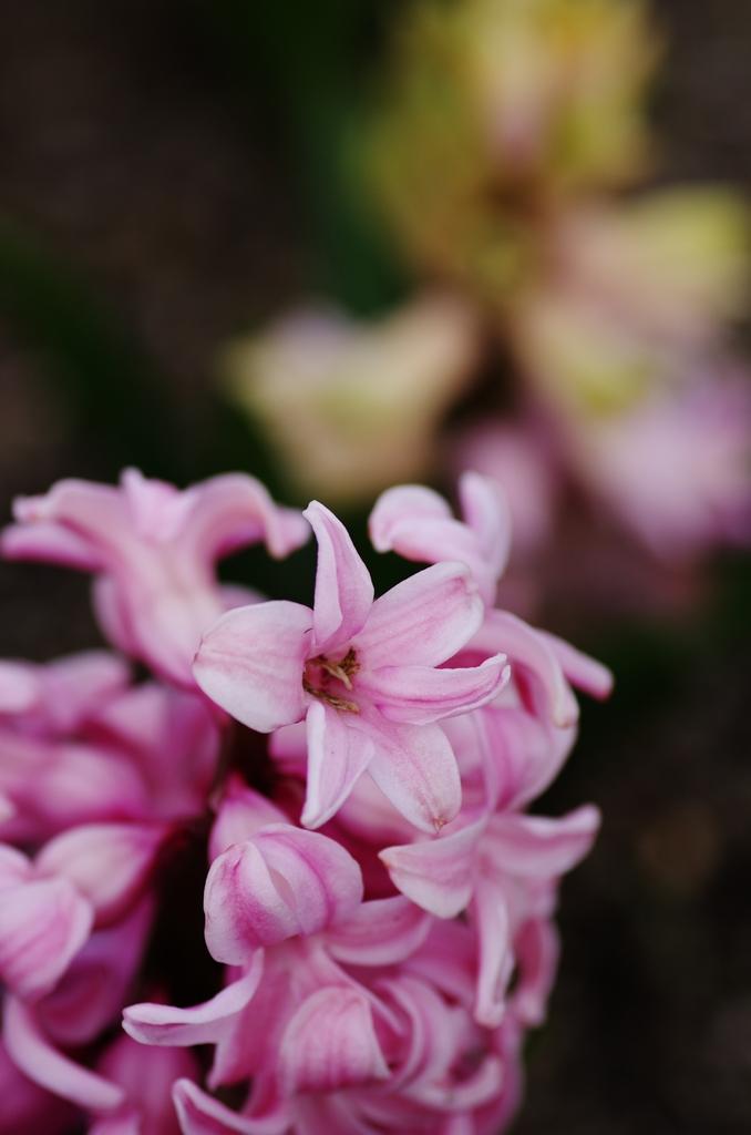 「花とマクロレンズ」_a0133692_2065077.jpg