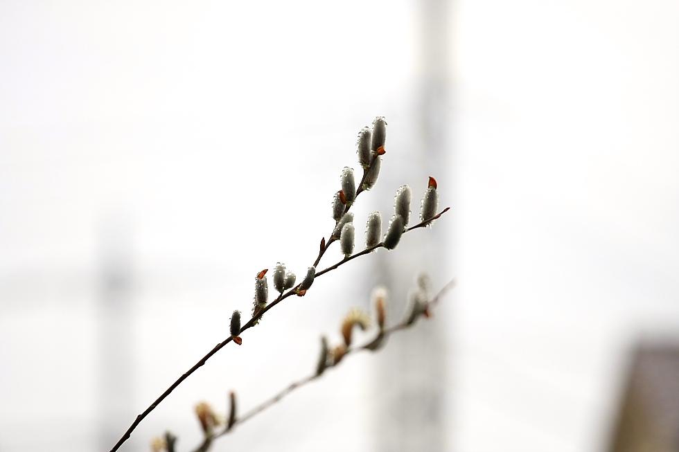 光る春_b0190710_2249407.jpg