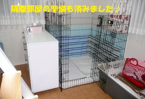 f0121712_756159.jpg
