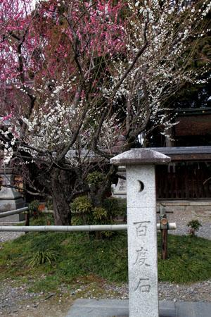 梅の宮大社 梅と椿_e0048413_214785.jpg