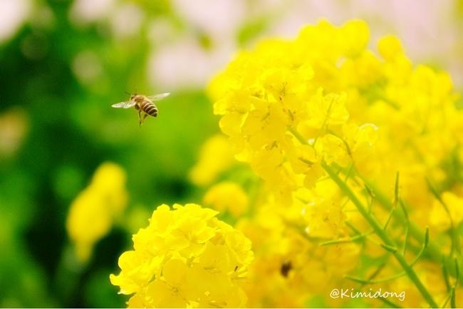 春模様_a0229217_13185189.jpg
