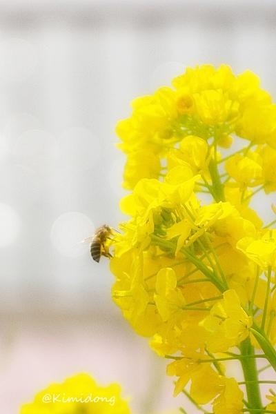 春模様_a0229217_13192197.jpg