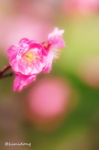 春模様_a0229217_13194135.jpg