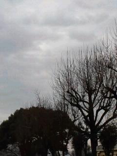 樹のシルエット。_a0194522_603661.jpg