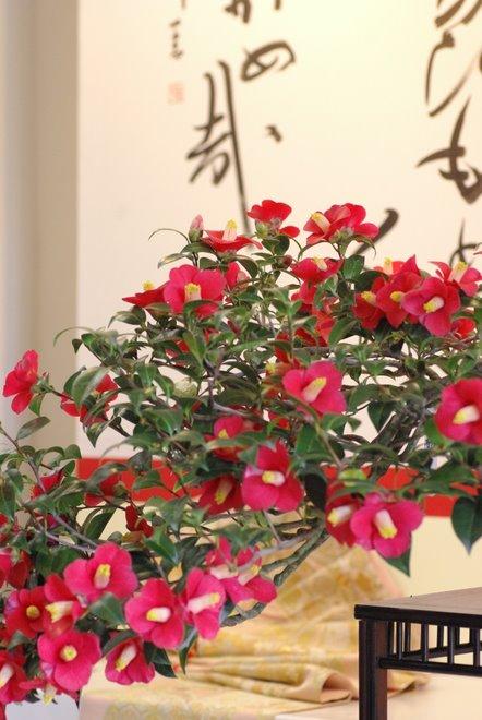 梅と椿が香る名古屋城 椿展_e0171336_10561576.jpg