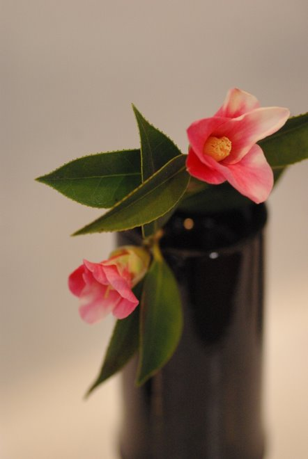 梅と椿が香る名古屋城 椿展_e0171336_10574378.jpg