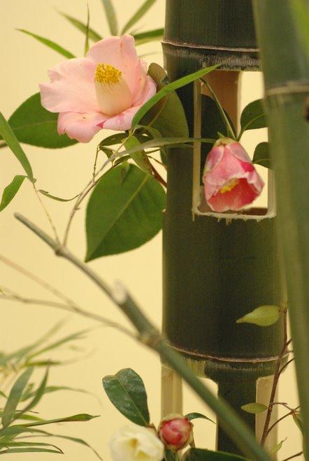 梅と椿が香る名古屋城 椿展_e0171336_10585992.jpg