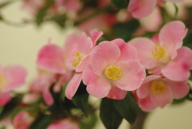 梅と椿が香る名古屋城 椿展_e0171336_110178.jpg
