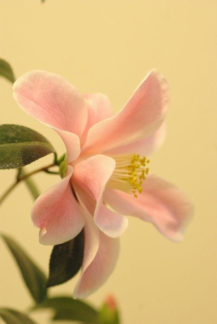 梅と椿が香る名古屋城 椿展_e0171336_11124050.jpg