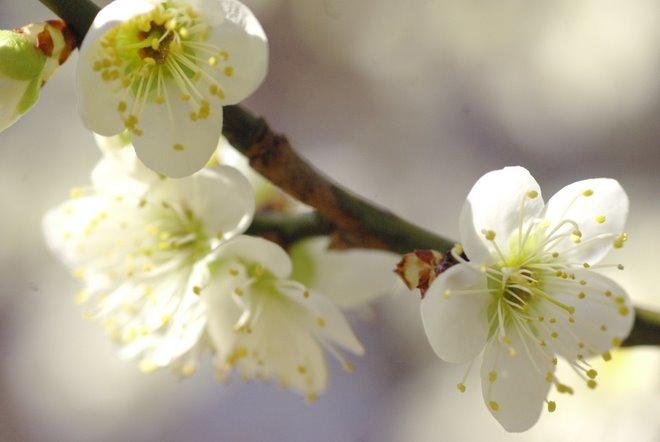 梅と椿が香る名古屋城 椿展_e0171336_12131696.jpg
