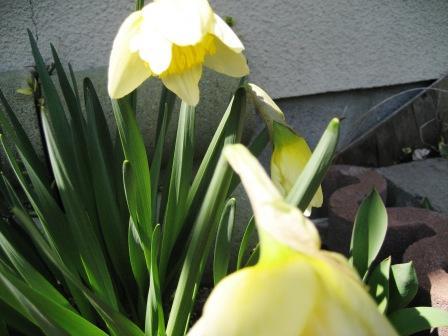 寒いけど 春は 近づいています。_c0206545_12464593.jpg