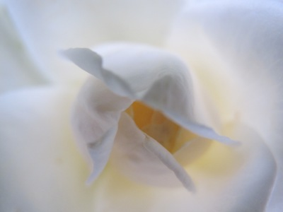 3月 21日 白いバラと青い遺跡です。_b0158746_2056396.jpg