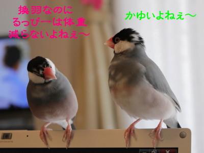 b0158061_19471538.jpg