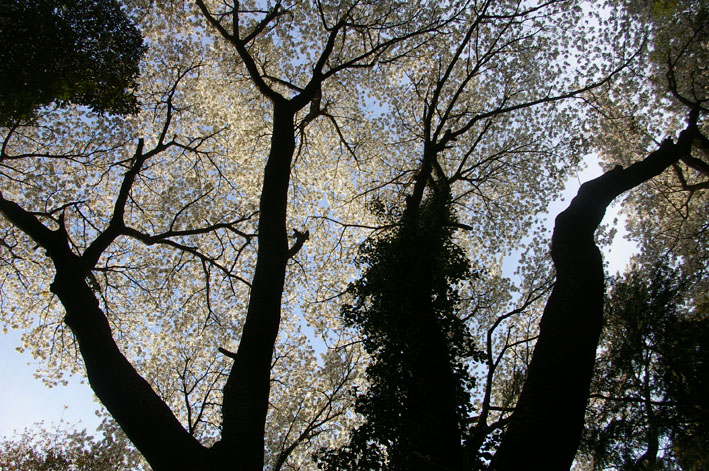 2011年度六国見山森林公園の臨時手入れ終了:3・26_c0014967_1849452.jpg