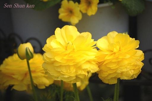 早春の草花展_a0164068_2214695.jpg