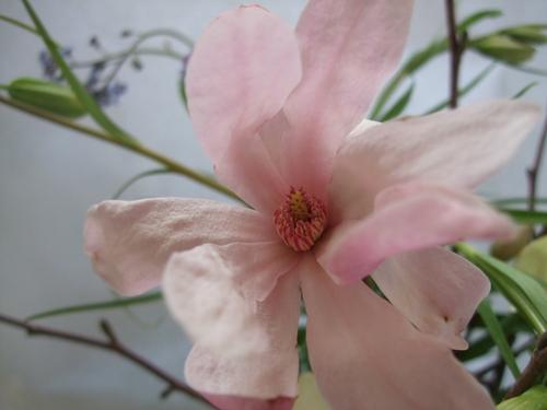 オークリーフ(シデコブシとバラの花束)_f0049672_14395.jpg